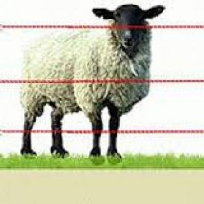 Электропастух 2-х рядный для овец 2 Га